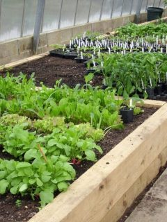 Landscape-Timbers-Used-in-Raised-Bed