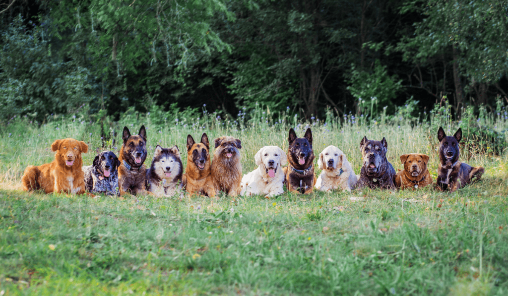 Group of Dogs sitting on the green grass